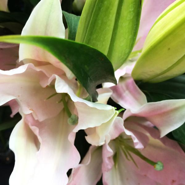 花処蔵スライド写真